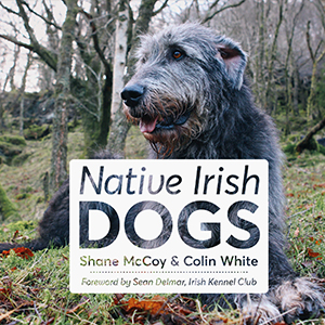 native-irish-dogs