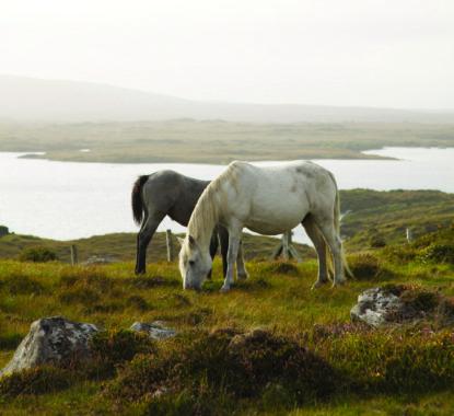 carna-pony-foal