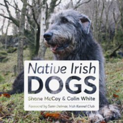Native Irish Dogs Book Cover