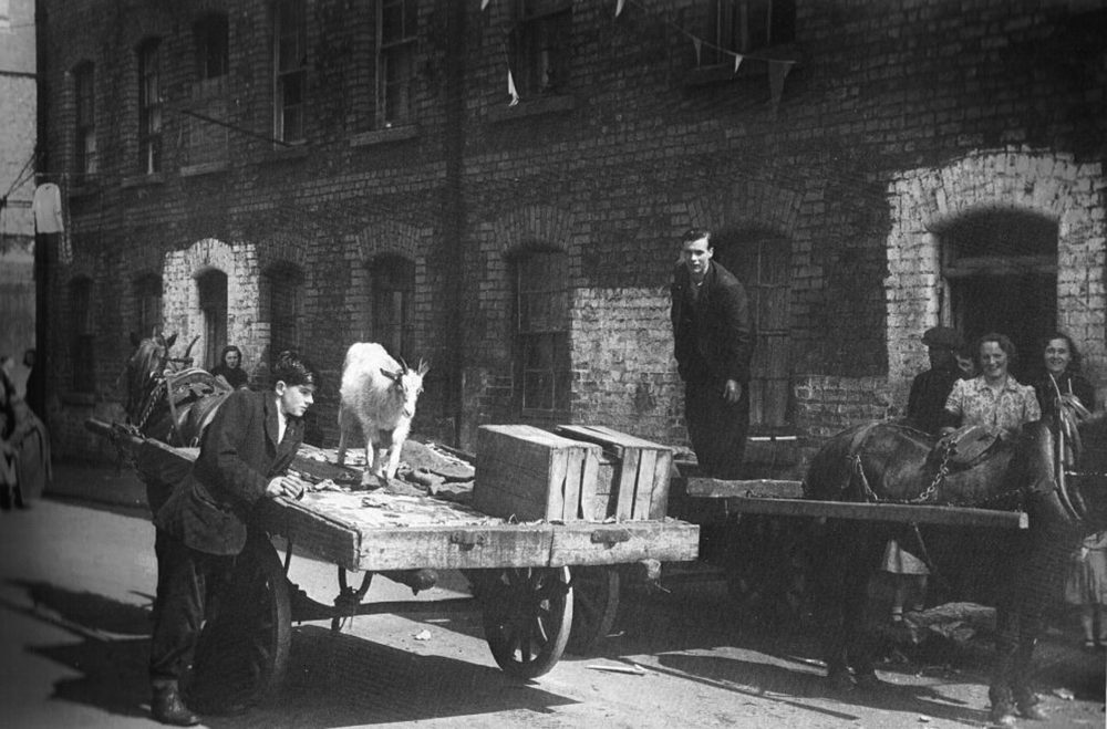 Goat being delivered to Taylor's Lane in the 1940s