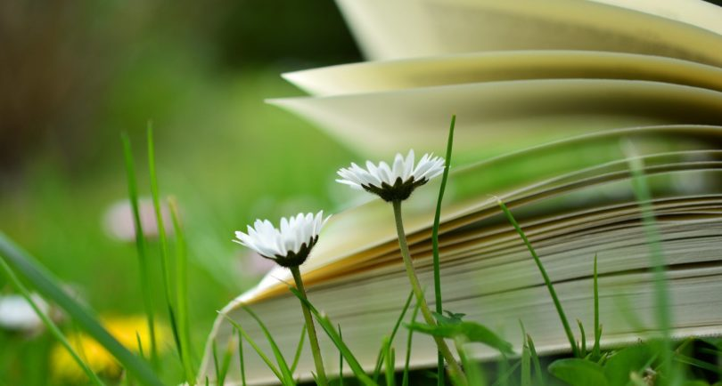 Book lying in the grass